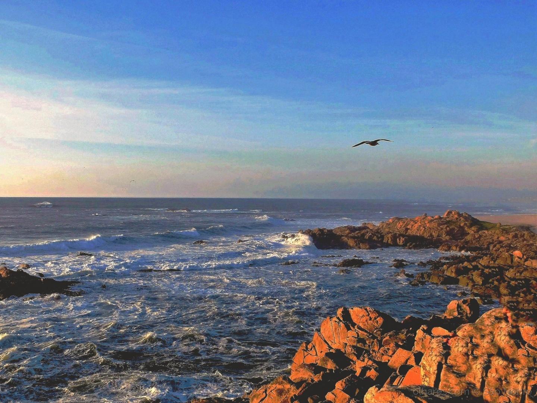 Paisagem Natural/Se Uma gaivota Viesse....