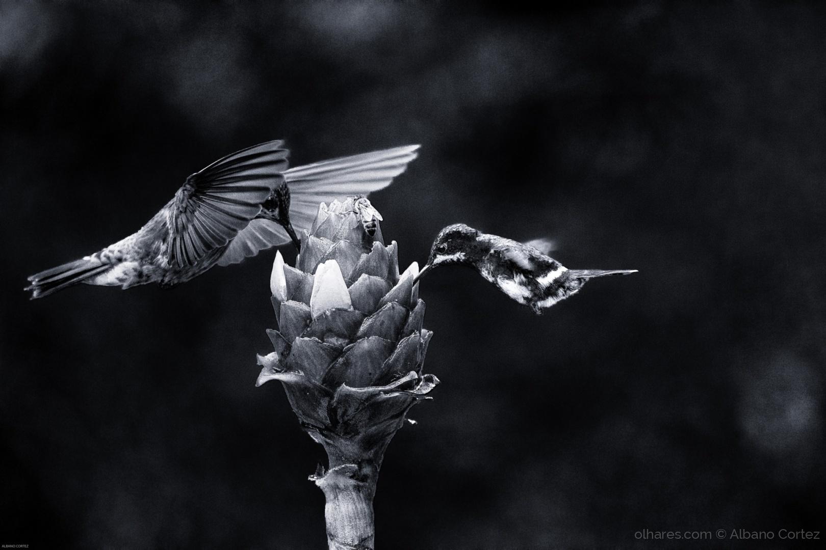 Animais/Birds in B&W.