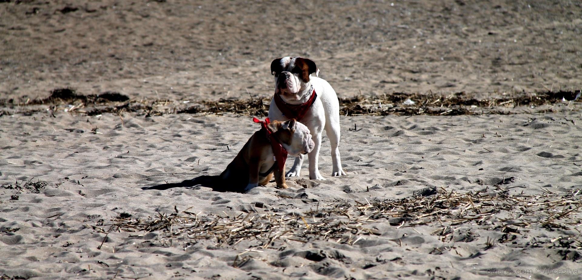 Animais/Os amigos de quatro patas.........