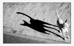 Animais/O cão com sombra de gato