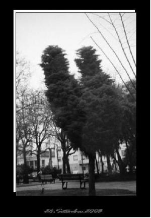 Paisagem Natural/árvore c/ forma de coração