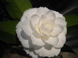 /flor2