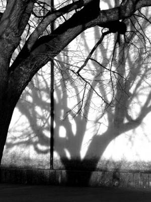 /sombra1