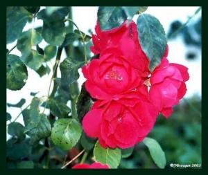 /Flores #005