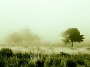 /nevoeiro na serra
