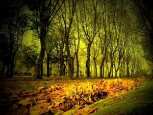 """/""""Outono"""" Leça do Balio"""""""