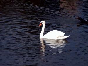 /o lago dos cisnes