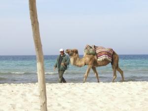 /Olha o Camelo!!! :)