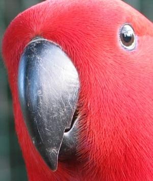 /Vermelho