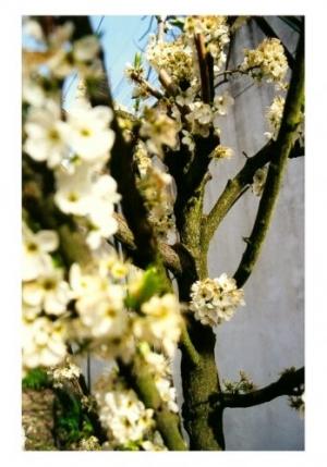 /a primavera vem aí..