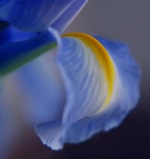 /Mais flores