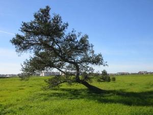 /Tree tree