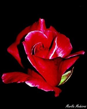 Arte Digital/O segredo da rosa...