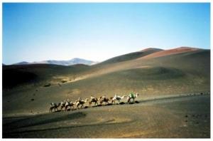 /Camelos