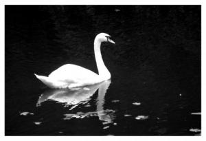 /O lago do Cisne...