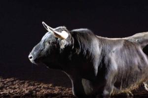 /feira do touro 2003