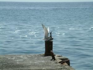 /Sea Love