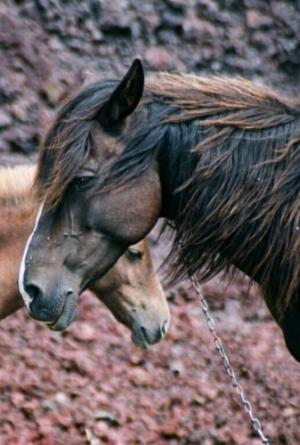 /Cavalos II
