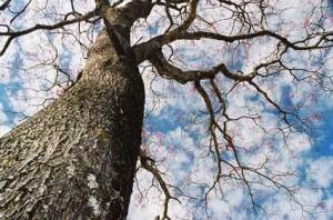 /Árvore