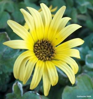 /Sorriso Amarelo