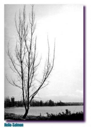 Paisagem Natural/Natureza Morta