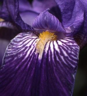/Flor #1