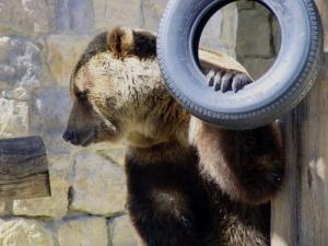 /Urso