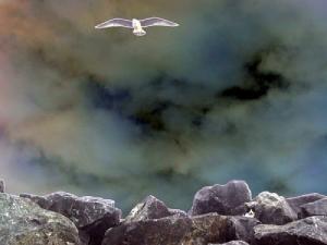 /Por terra e por ar, ganham a vida a pescar