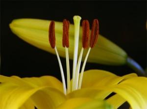 Macro/Mais flores,...
