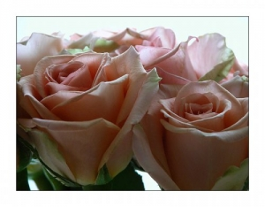 /Rosas