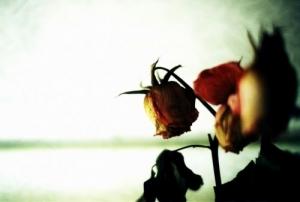 /Apenas mais uma Rosa...