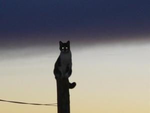 /equilibrio felino