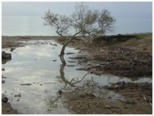/Reflexo - Timor Leste