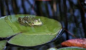 /Mr.Frog