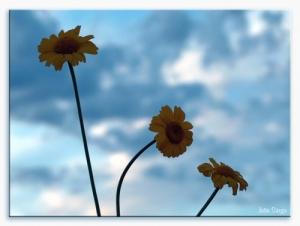 Paisagem Natural/flutuando no céu