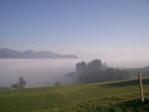 /mar de neblina