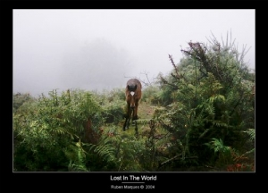 /Lost In The World...
