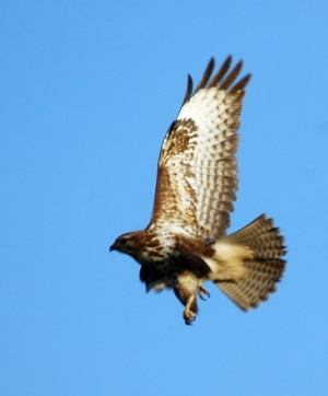 /O voo da águia