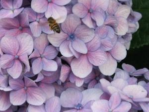 /Carregando o mel