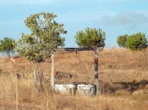 Paisagem Natural/O velho poço