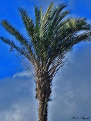 Outros/Palmeira Citadina