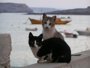 Animais/Gatos pescadores