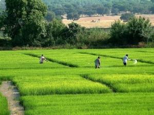 Outros/arrozal