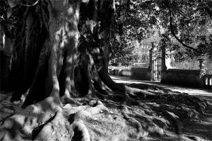 Outros/Árvore Centenária