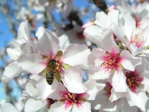 Outros/Zabelha na flor