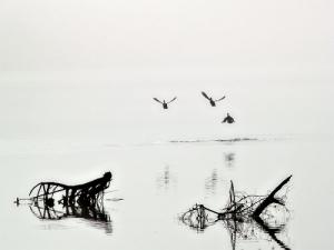 /... voando para a Liberdade ...