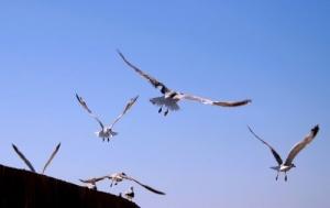 /Voar, voar