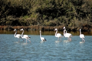 /flamingos II