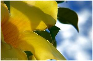 /flor amarela2