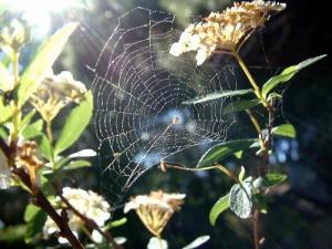 /teias... que a aranha tece